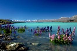 Ile Sud, Tekapo (lac)