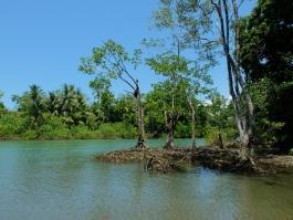 Corcovado (parc national)
