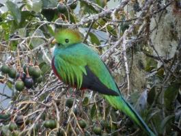 Parc national des quetzals