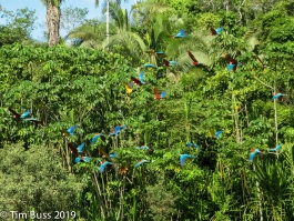 Amazonie, Tambopata (réserve nationale)