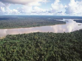 Amazonie (forêt)