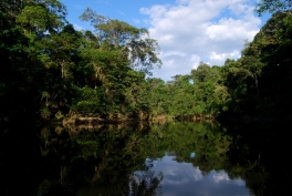 Amazonie, Yasuni (parc national)