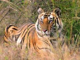 Bandhavgarh (Parc National), Madhya Pradesh