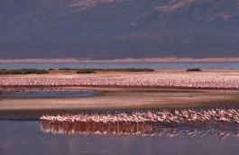 Bogoria (lac)