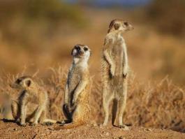Kalahari (réserve)