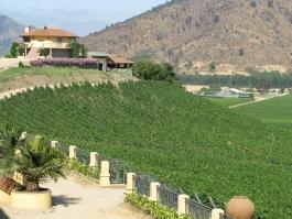 Centre, vignobles de Santa Cruz