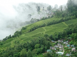 Bengale Occidental, Darjeeling