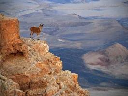 Néguev (désert)