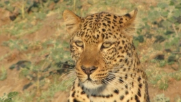 Emdoneni Cheetah project (sanctuaire)