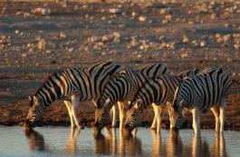 Etosha (parc national)