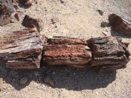 Forêt pétrifiée (Damaraland)