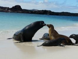 Galapagos, île d'Española