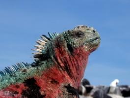 Galapagos, île Fernandina