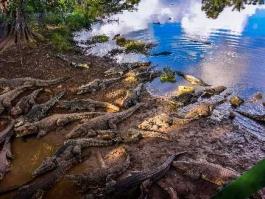 Guamà (élevage de crocodiles)