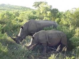 Hluhluwe-Umfolozi (réserve)