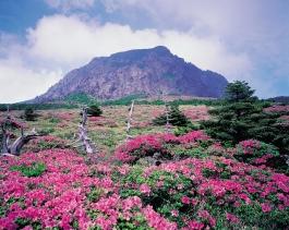 Ile de Jeju, Hallasan (parc national)