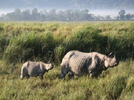Kaziranga (Parc National), Assam