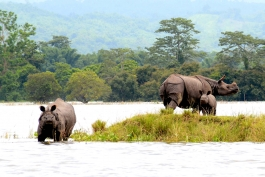 7 Sisters, Assam, Kaziranga (parc national)