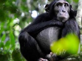 Kibale (forêt)