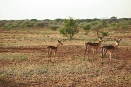 Madikwe (réserve)