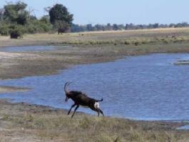 Mahango (réserve)