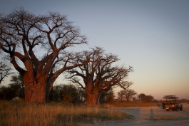 Makgadikgadi (parc national)