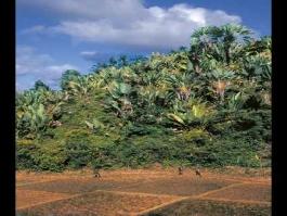 Mondésir (plantation)