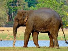 Karnataka, Nagarhole (parc national)