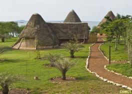 Ngamba (île aux chimpanzés)