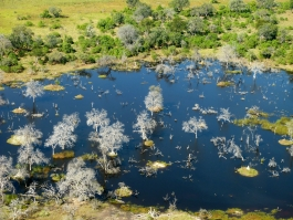 Okavango (delta)