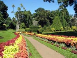 Peradeniya (jardin botanique)