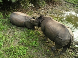 Chitwan (parc national)