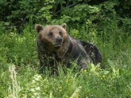 Sanctuaire des ours à Zarnesti