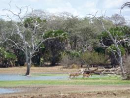 Sud, Selous (réserve)