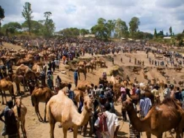 Amhara Est, Sembete