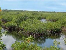 Yucatan, Sian Ka'an (réserve)