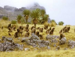 Simien (Parc National)