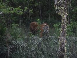 Sud Ouest, Sundarbans