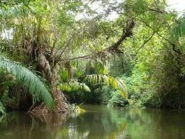 Los Guatuzos (réserve naturelle)