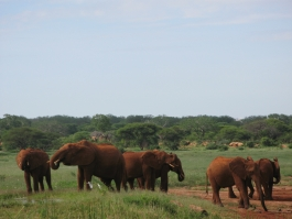 Tsavo (parc national)
