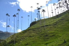 Cocora (vallée)