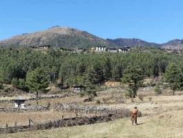 Phobjikha (vallée)