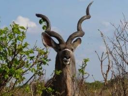 Gaborone (ville et réserve)