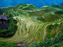 Chine du Sud, Longsheng