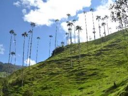 Vallée de Cocora (vallée)