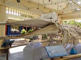 Maui - Whalers village museum