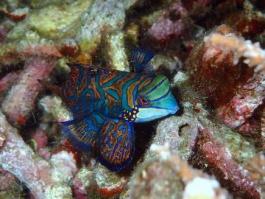 Ile de Sulawesi, Bunaken (parc national marin)