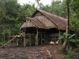 Ile de Sumatra, Siberut (île)