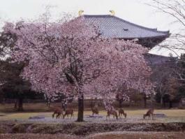 Honshū, Nara