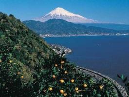 Honshū, Shizuoka